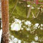 朝田寺紅蓮の浮き葉
