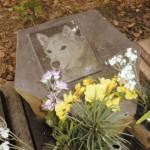 フウ太のお墓