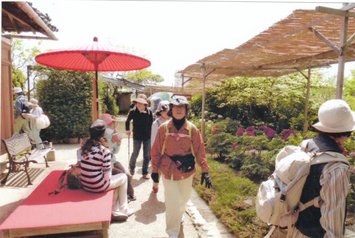 松阪 朝田寺の牡丹