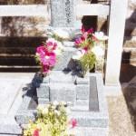 永代供養墓のコスモス