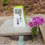 ピータンのお墓